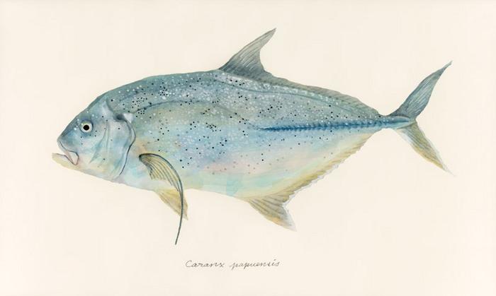 Caranx papuensis