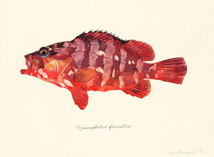 Epinephelus_fasciatus
