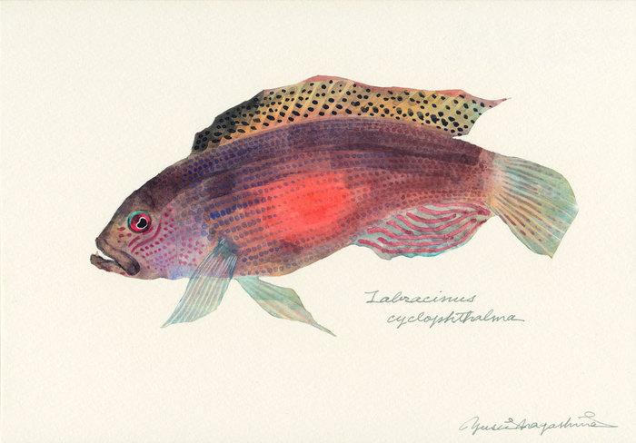 Labracinus_cyclophthalma