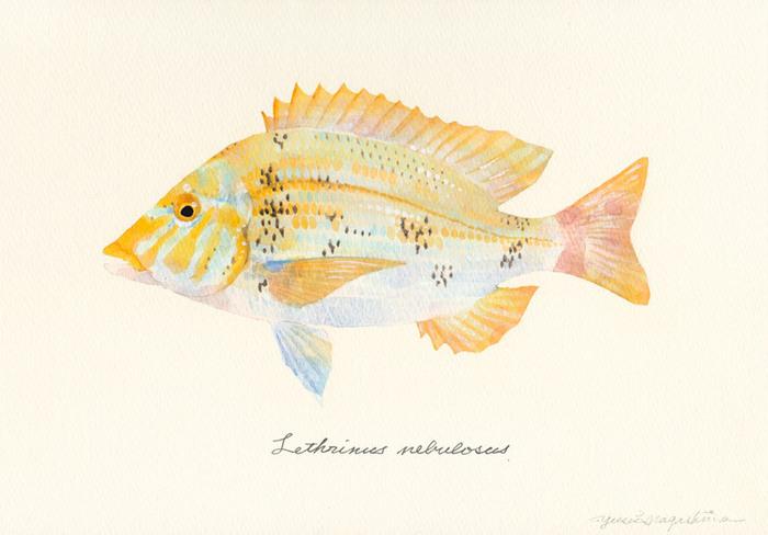 Lethrinus nebulosus