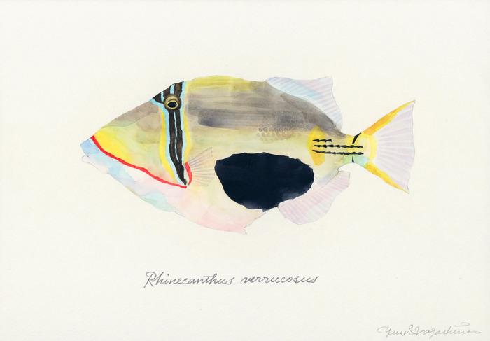 Rhinecanthus_verrucosus