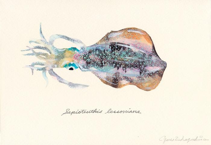 Sepioteuthis_lessoniana