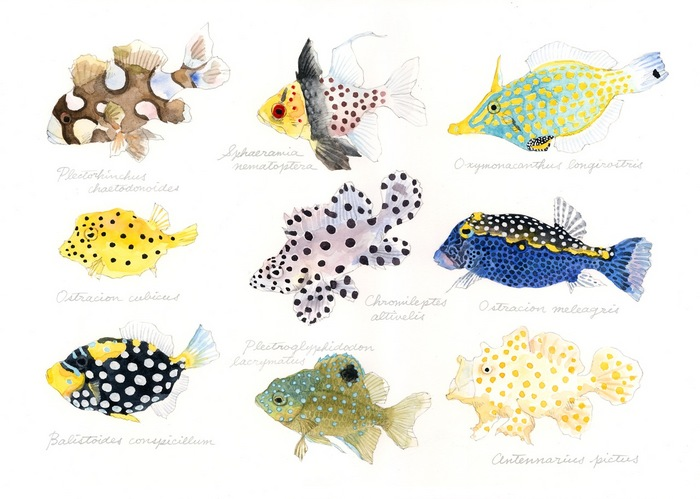 polka-dot fish